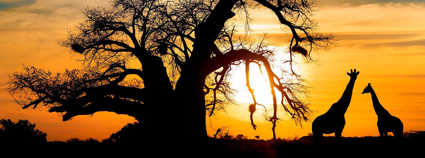 Kapkaupunki Ja Eksoottinen Afrikka Matkapojat